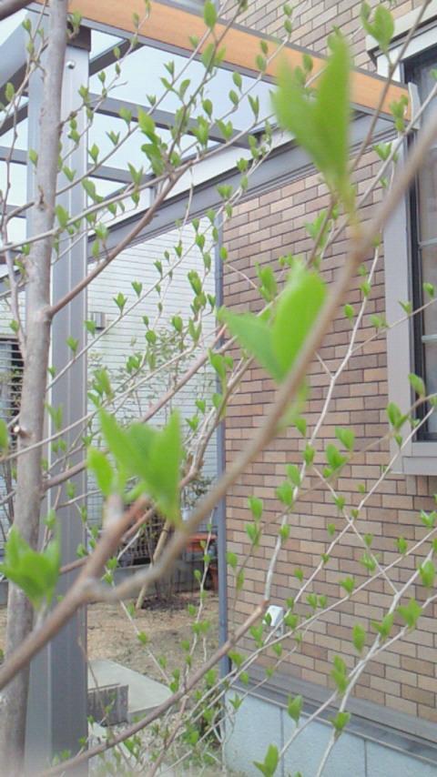 春の色(^3^)/
